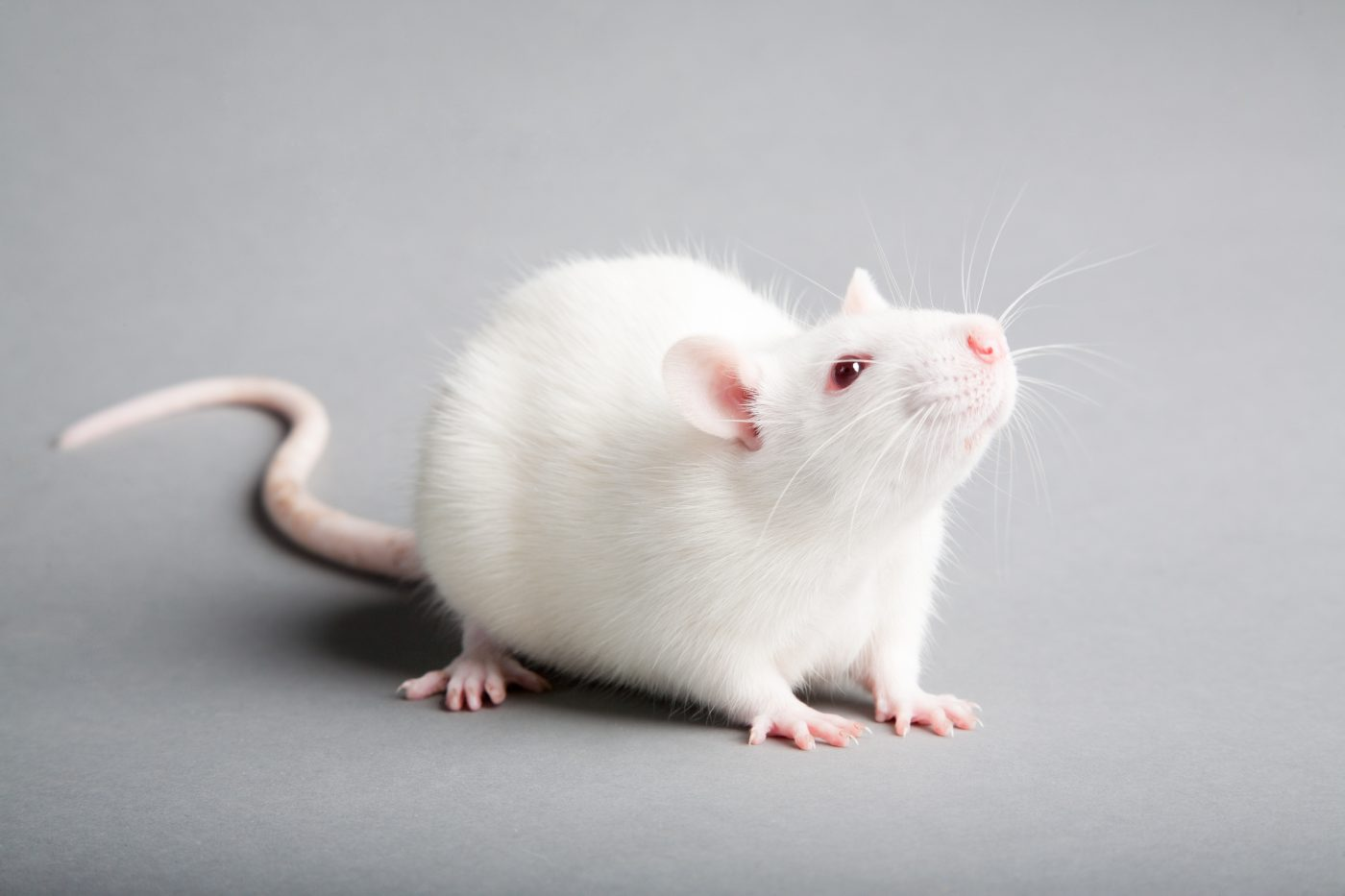 Pfizer's Inhibitor Drug Able to Reduce Neurodegeneration in Parkinson's Disease Animal Models