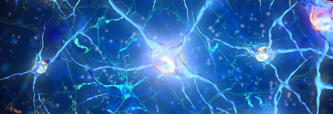Parkinson's Mouse Model Hints at Possibility of Neuron Regrowth in Adult Brains