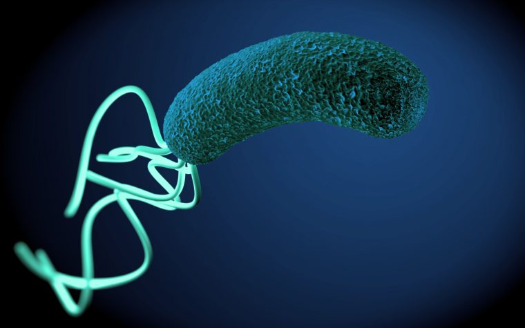 The gastric ulcer bacteria Helicobacter pylori are linked to the presence of autoantibodies in patients with Parkinson's disease, possibly explaining the link between the conditions.
