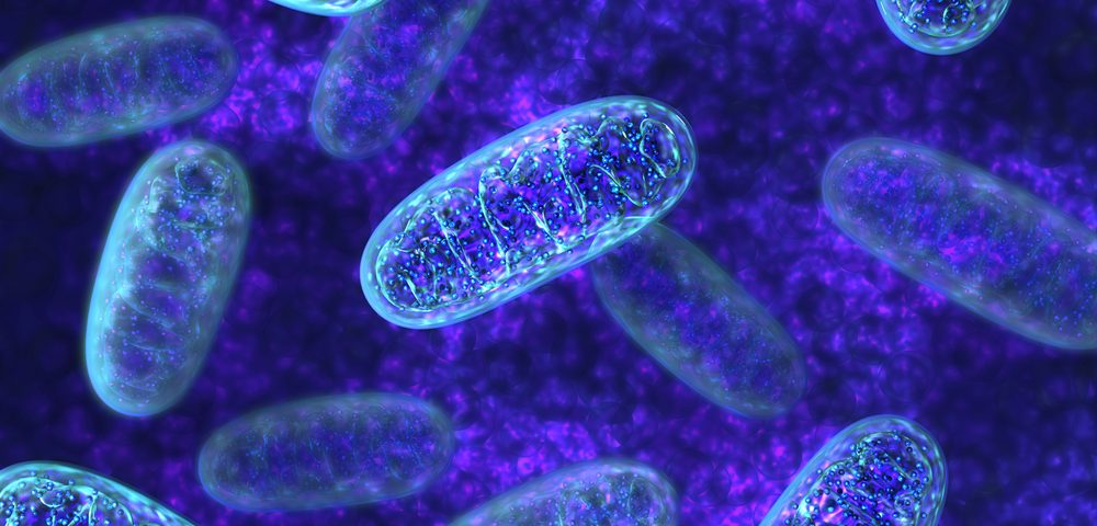 Key to Neuron Death in Parkinson's Disease Found in Aging Mitochondria