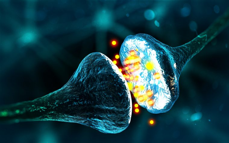 Synaptic Proteins Linked to Parkinson's Could Aid in Early Intervention, Study Says