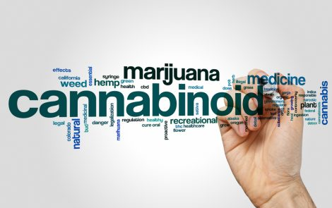 Emerald Health Pharmaceuticals' Cannabinoid-Derived Compound Beneficial in Parkinson's, Mouse Study Finds